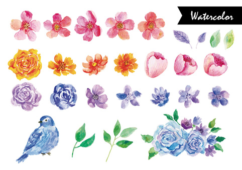 Plant and bird watercolor illustration set