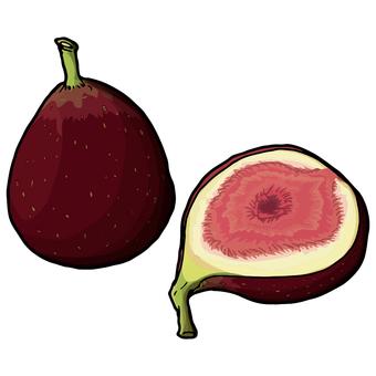 Fig / fig flower / Fig