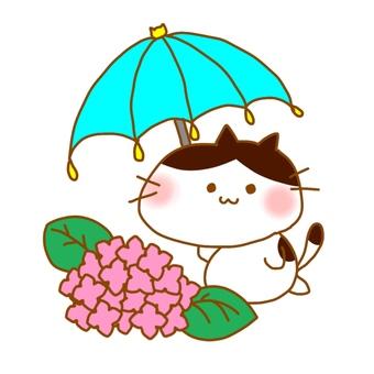 Nyanko on a rainy day