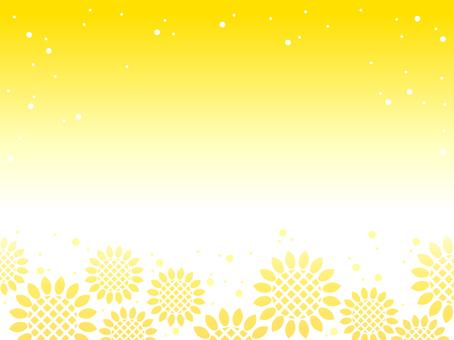 Sunflower 05