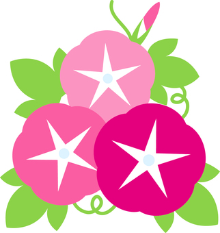 Asagao _ pink