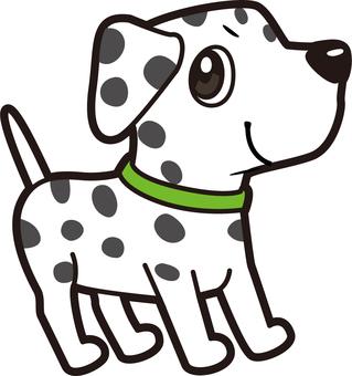 Dog _ Dalmatian
