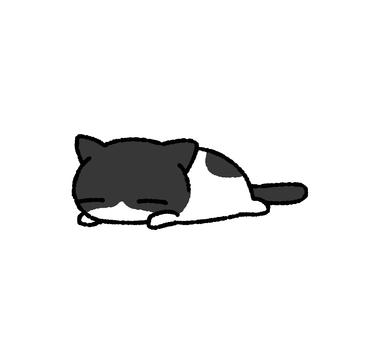 Eight broken cats