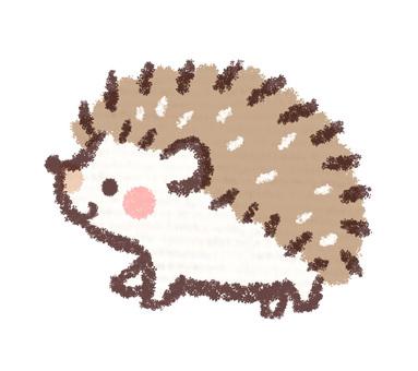 Hedgehog children