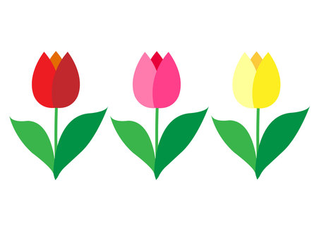 Tulip red pink yellow