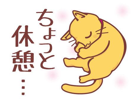 Good night Cat
