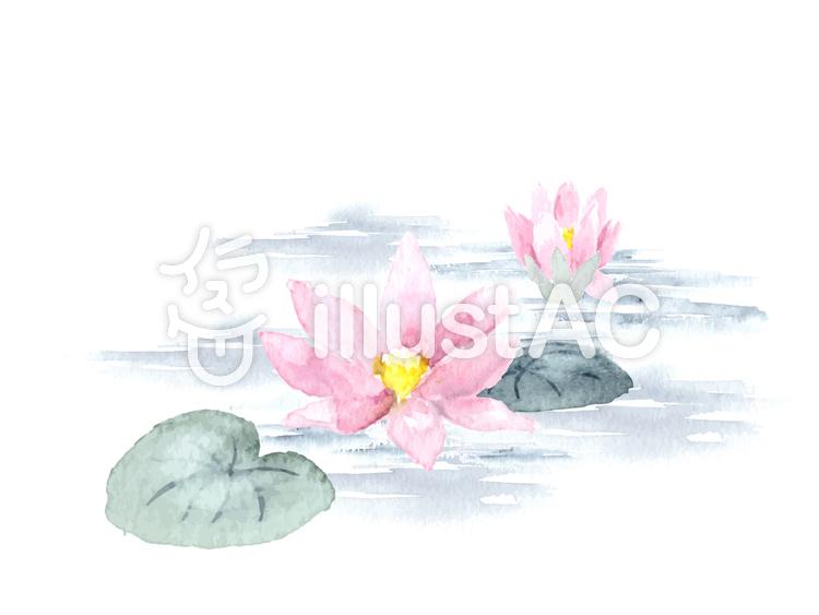 水彩で描く蓮の花 睡蓮イラスト No 1019750無料イラストなら