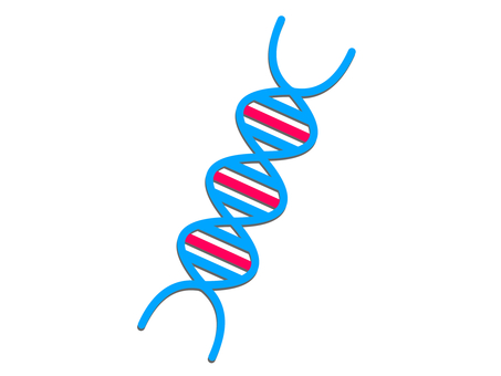 DNA double helical structure