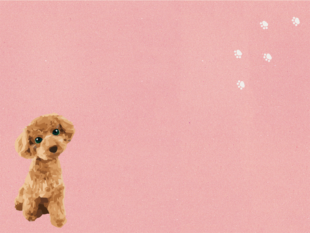 Toy poodle and background