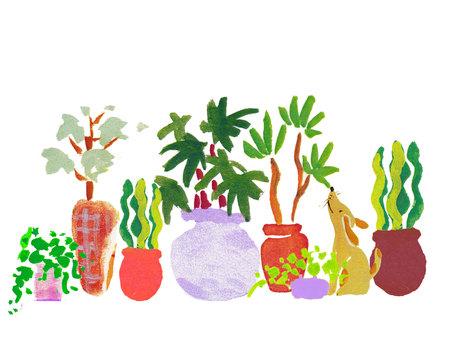 개 _ 관엽 식물 01