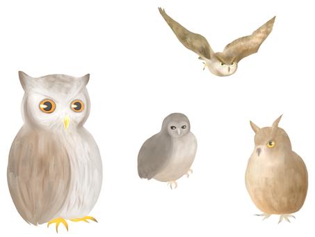 Earthworm owl
