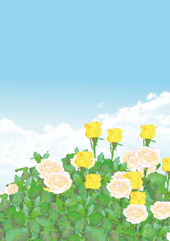 Yellow and white rose background