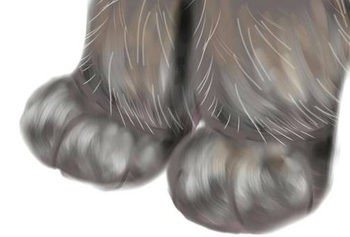 Cat forefoot