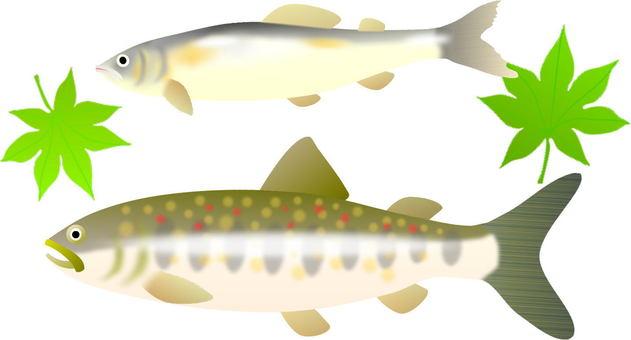 Ayu and rockfish