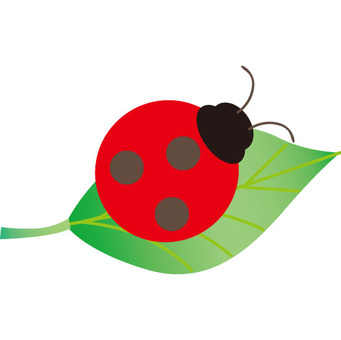Ladybird and leaves