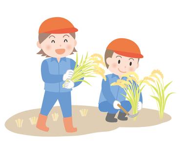 Elementary school student to harvest