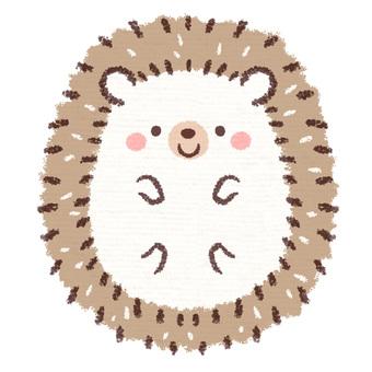 Hedgehog belly pop