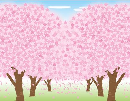 벚꽃 터널