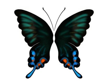디자인 나비 1