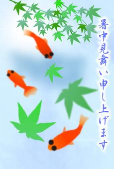 暑中見舞い 金魚