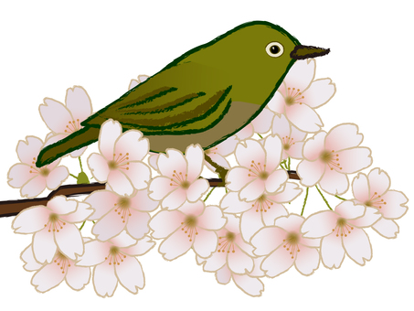 Japanese style whiskers and cherry blossoms