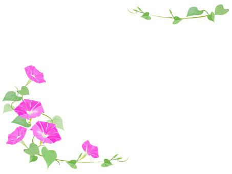 牽牛花粉紅色的框架