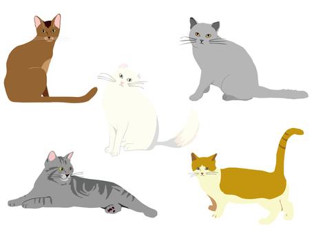 Cats 5 species