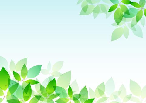 Fresh green material 50
