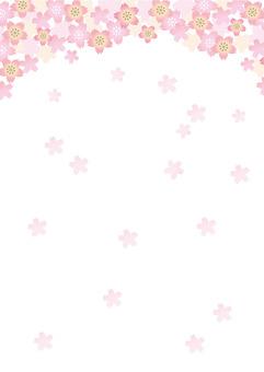 Cherry Background White Back