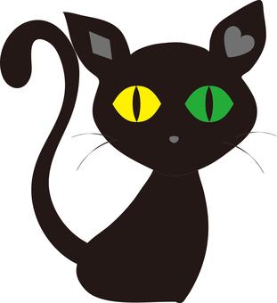 Cat (black cat) 2