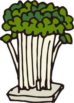 야채 (새싹 스폰지 포함)