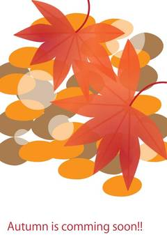 Autumnal leaves season A4