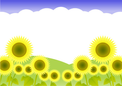 Sunflower field -3