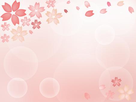 Cherry blossoms pale