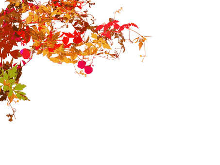 Kazura Autumn Leaves