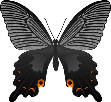 Black butterfly butterfly