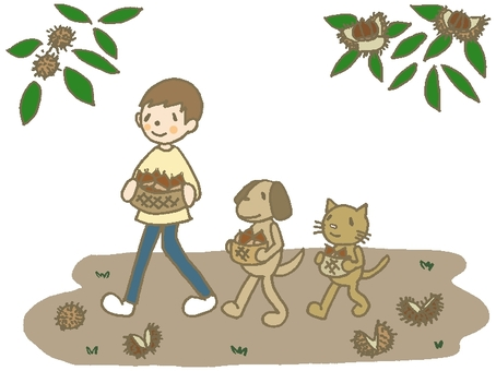 Hakuhoku with picking chestnut
