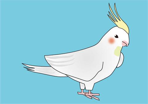 Illustration of the cockatiel