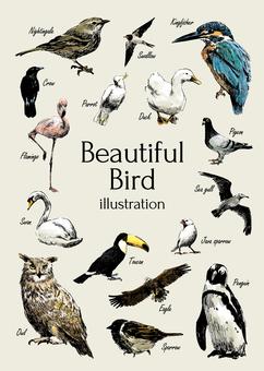 美しい鳥イラスト