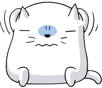 White cat suffered