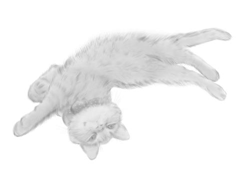 変なポーズの猫