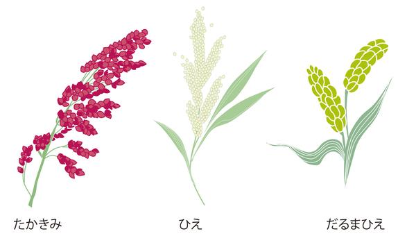 Fruit millet