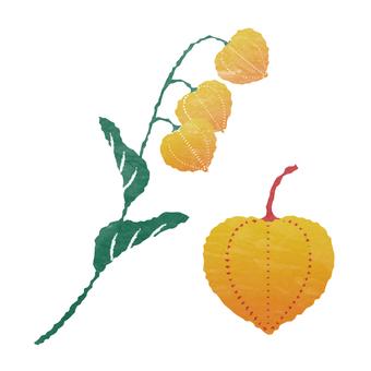 水彩風・ホオズキの果実