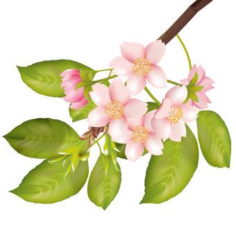 Spring · Sakura · Sakura 09