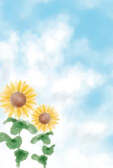Blue sky Sunflower postcard size
