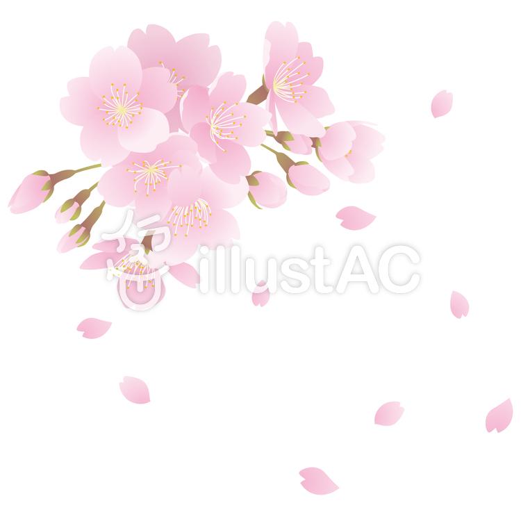 桜の花イラスト No 56508無料イラストならイラストac