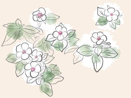 Grass flower sketch