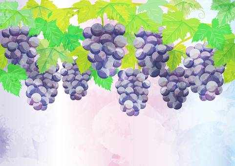 Watercolor style grapes