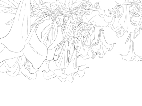 Angel trumpet (line drawing)