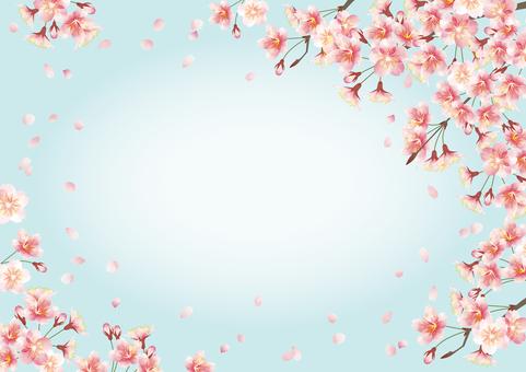 Cherry blossom, frame, blue sky